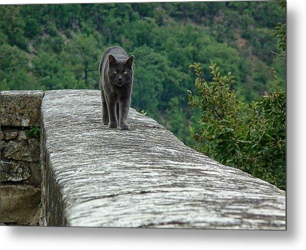Gray Cat Prowling Metal Print
