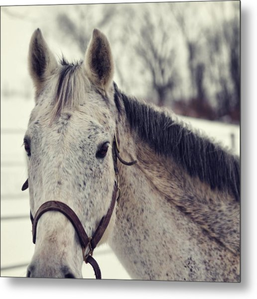 Gray On Winter White Metal Print by JAMART Photography