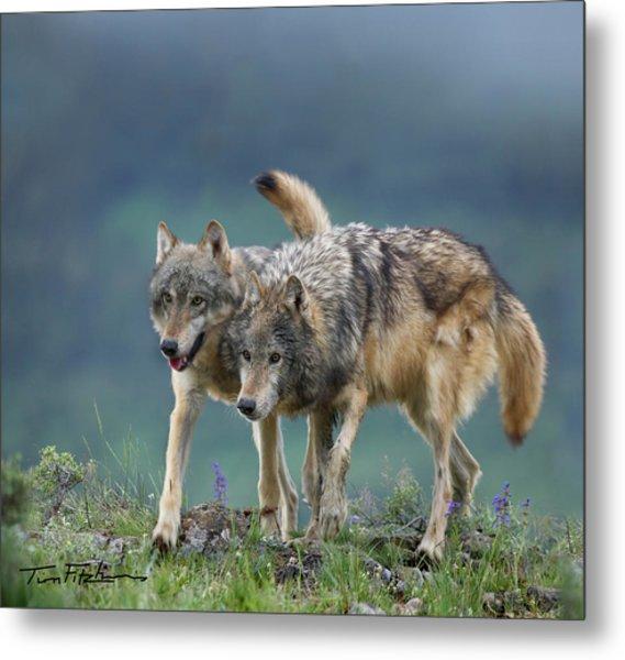 Gray Wolves Metal Print
