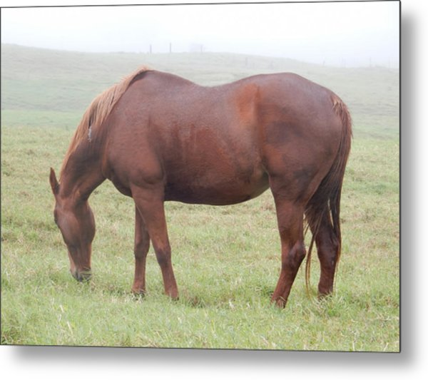 Grazing Again Metal Print