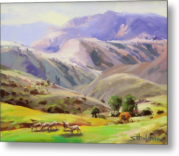 Grazing In The Salmon River Mountains Metal Print