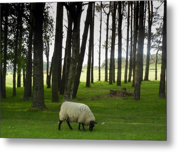 Grazing In The Woods Metal Print