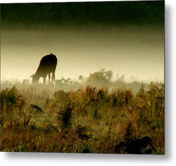 Grazing On A Misty Morning Metal Print by Kimberly Camacho