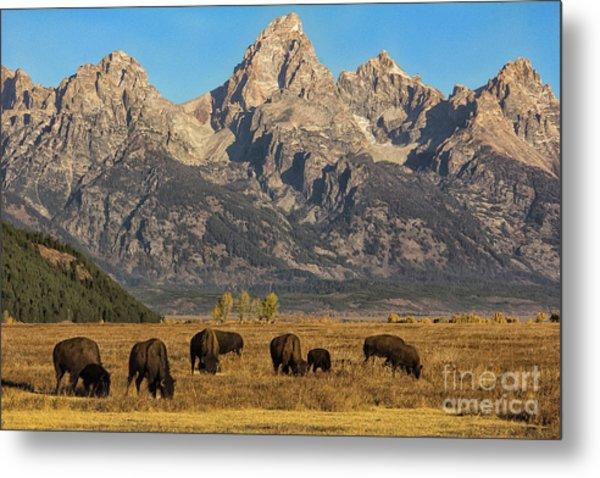Grazing Under The Tetons Wildlife Art By Kaylyn Franks Metal Print
