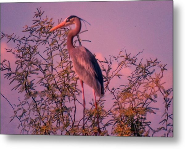 Great Blue Heron - Artistic 6 Metal Print