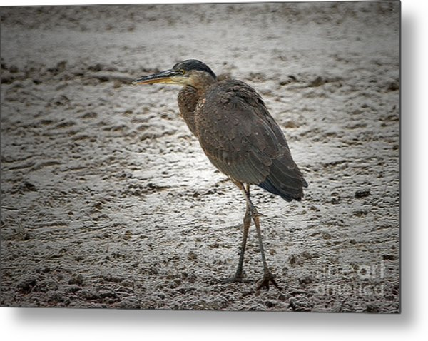 Great Blue Heron In The Snow Metal Print by Sharon Talson