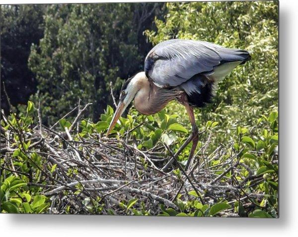 Great Blue Heron On Nest Metal Print