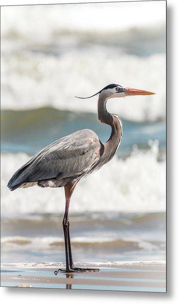 Great Blue Heron Profile Metal Print