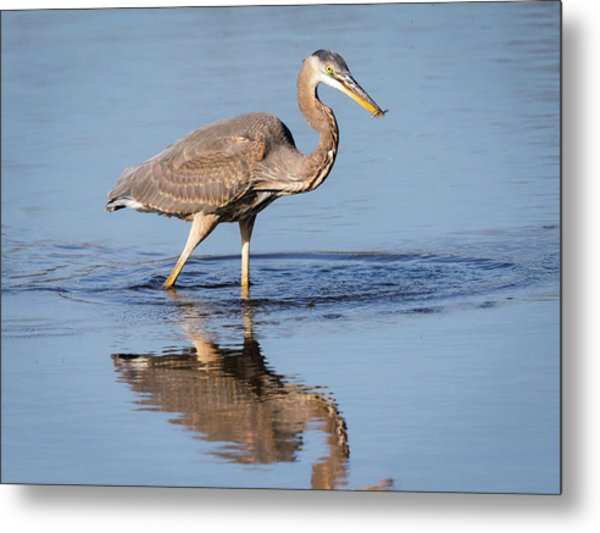Metal Print featuring the photograph Great Blue Heron With A Small Meal by Ricky L Jones