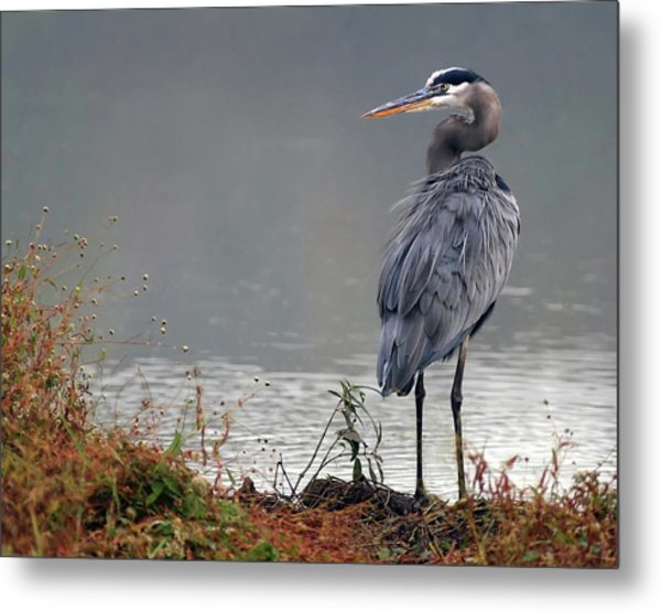 Great Blue Heron Landscape Metal Print
