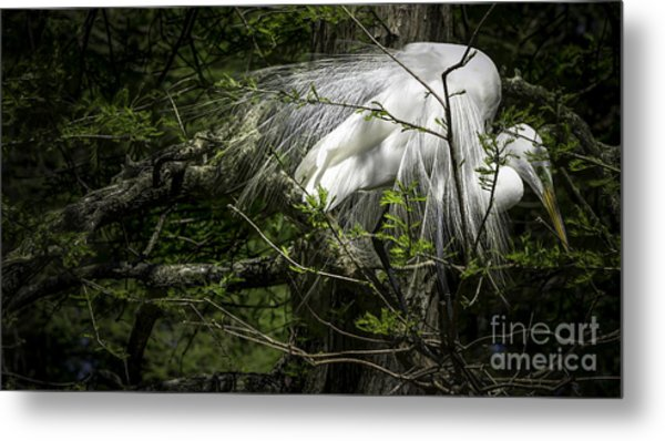 Great Egret #2 Metal Print