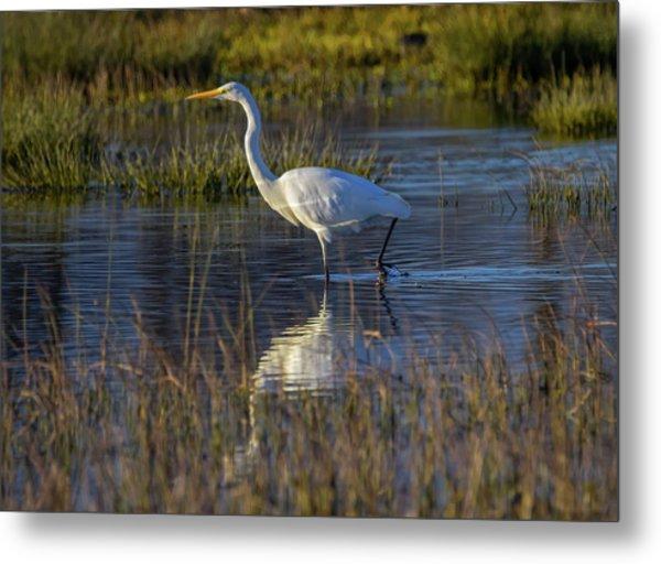 Great Egret, Ardea Alba, In A Pond Metal Print