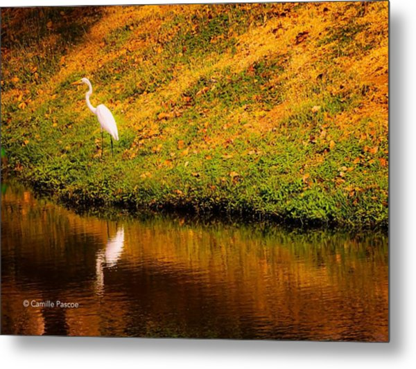 Great Egret At The Lake Metal Print