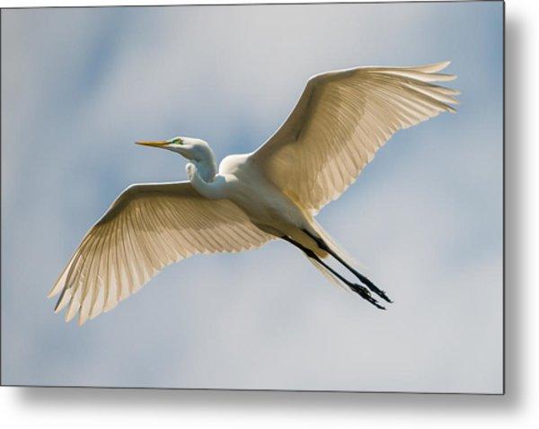 Great Egret In Flight - St. Augustine Fl Metal Print