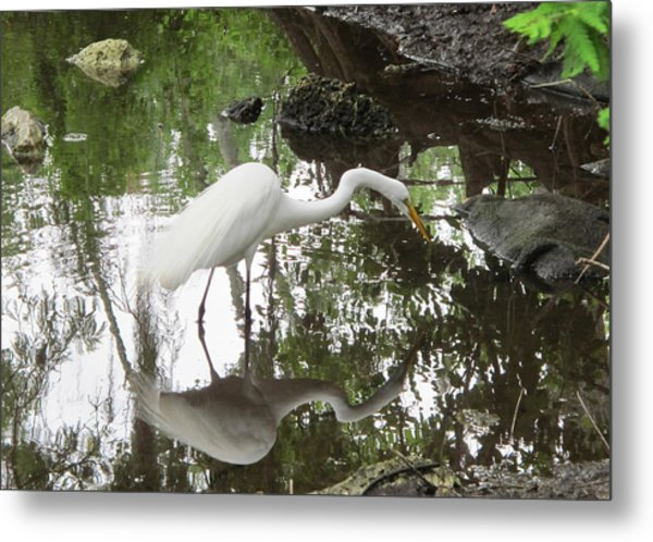 Great Egret Ready To Strike Metal Print
