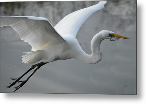 Great Egret With Fish Metal Print