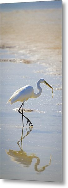 Great Egret With Prey Metal Print