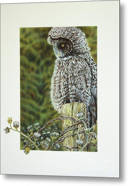 Great Grey Owl Metal Print