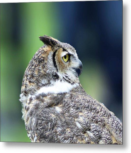 Great Horned Owl Profile Metal Print