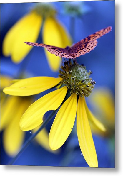 Great Spangled Fritillary On Yellow Coneflower Metal Print