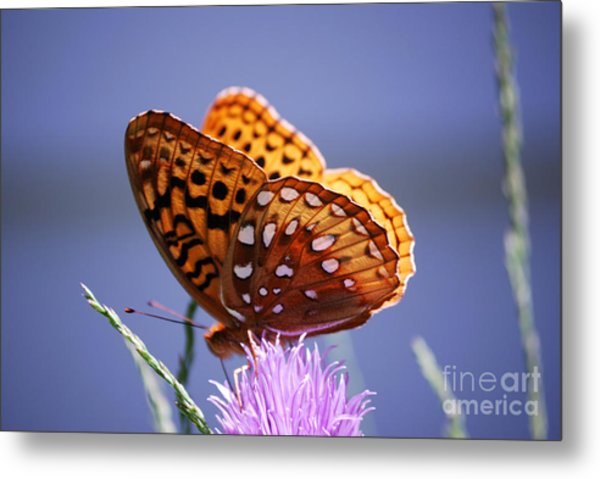 Great Spangled Fritillary Metal Print