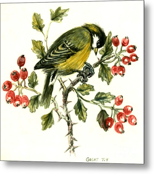Great Tit On Hawthorn Metal Print