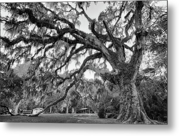Great Tree Metal Print