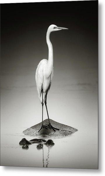 Great White Egret On Hippo Metal Print