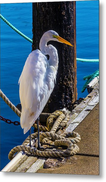 Great White Heron On Boat Dock Metal Print