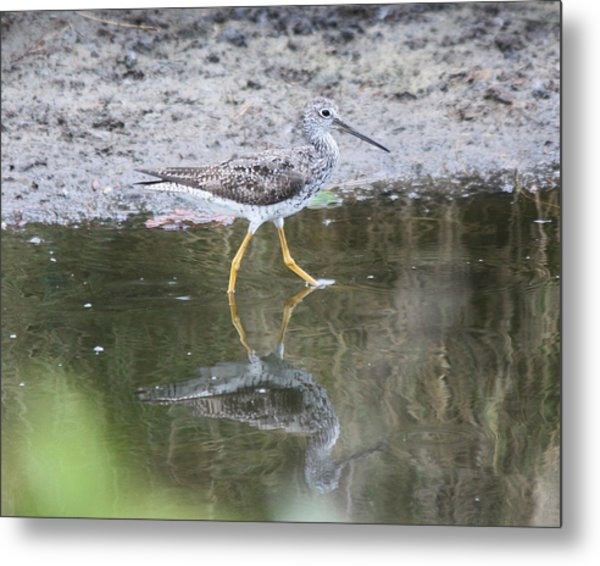 Greater Yellowleg Metal Print