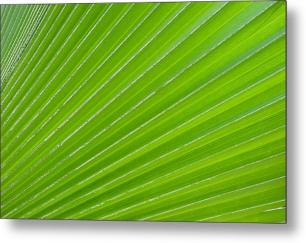Green Abstract No. 1 Metal Print