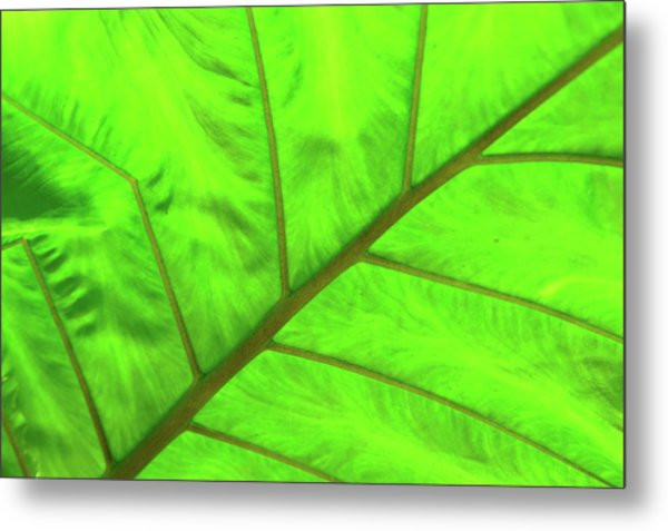 Green Abstract No. 5 Metal Print