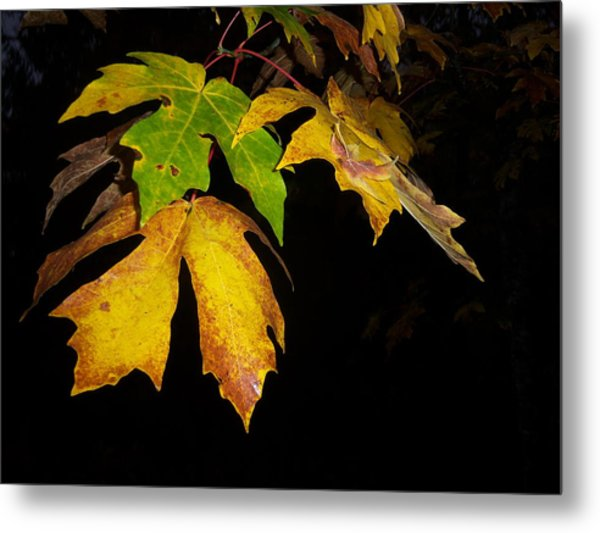 Green And Yellow Metal Print by Ken Day