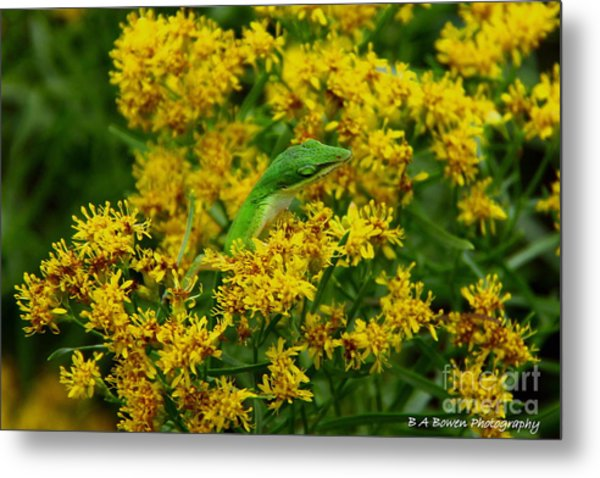 Green Anole Hiding In Golden Rod Metal Print