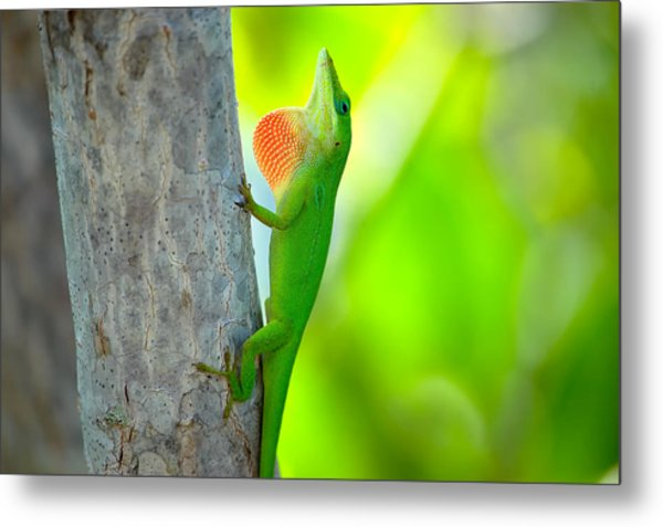 Green Anole Metal Print by Rich Leighton