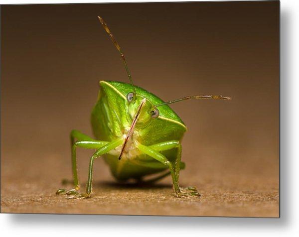 Green Bug Metal Print