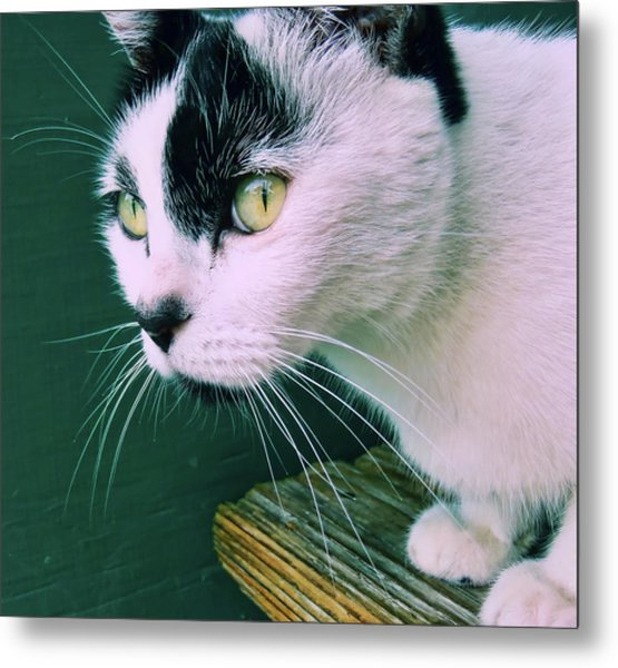 Green Eyed Metal Print by JAMART Photography