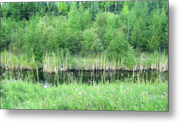 Green Grass Black Water Metal Print