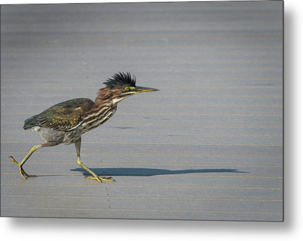 Green Heron On A Mission Metal Print