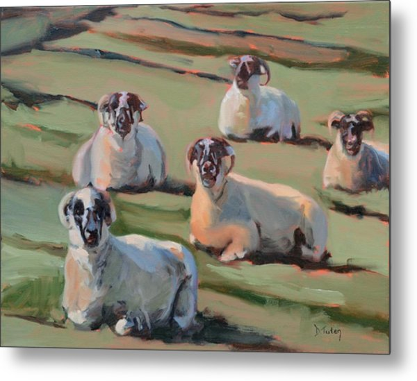 Green Hill Sheep At Rest Metal Print