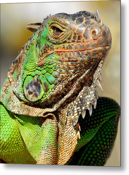 Green Iguana Series Metal Print