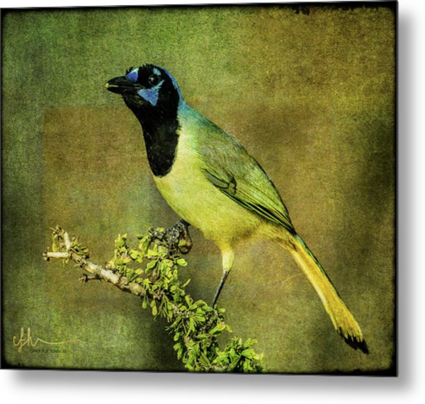 Green Jay With Textures Metal Print