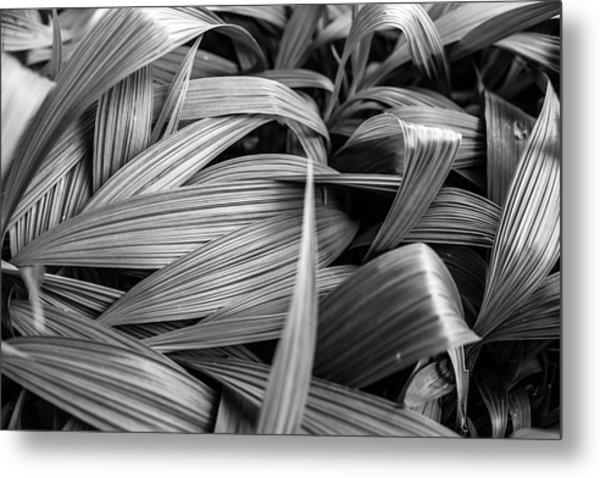 Leaves Textured And Background Metal Print
