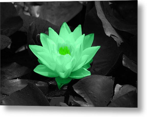 Green Lily Blossom Metal Print