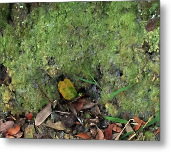 Green Man Spirit Photo Metal Print