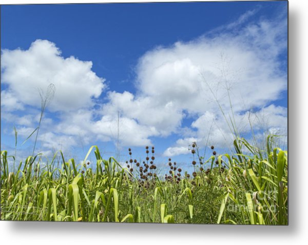 Green Meadow On Kauai Island, Hawaii Metal Print by Julia Hiebaum