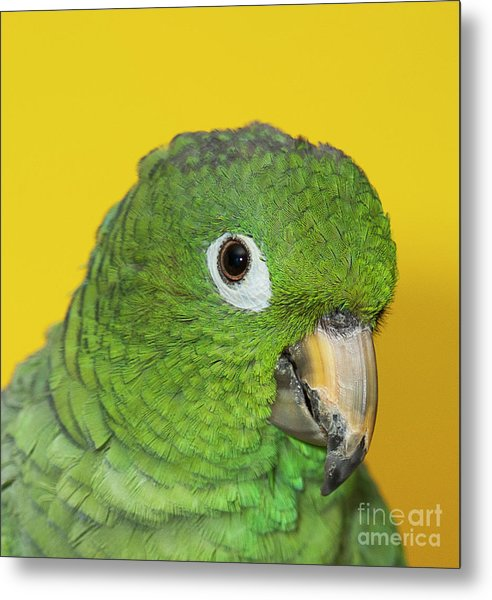 Green Parrot Head Shot Metal Print