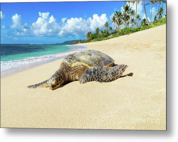 Green Sea Turtle Hawaii Metal Print