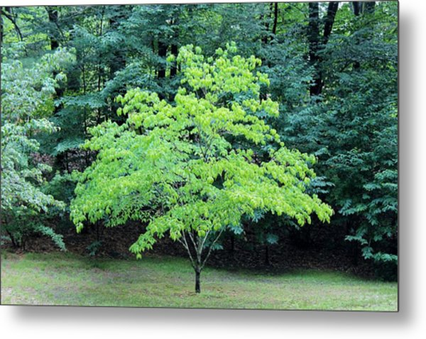 Green Standout Tree Metal Print