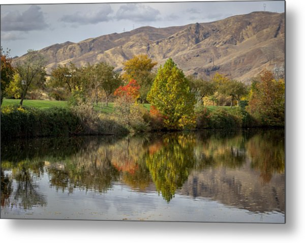 Green Tree Pond Reflection Metal Print
